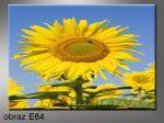 Moderní obraz do bytu 1D 70x50cm E-64