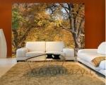 Moderní fototapeta na zeď vzor 37 strom, les, příroda