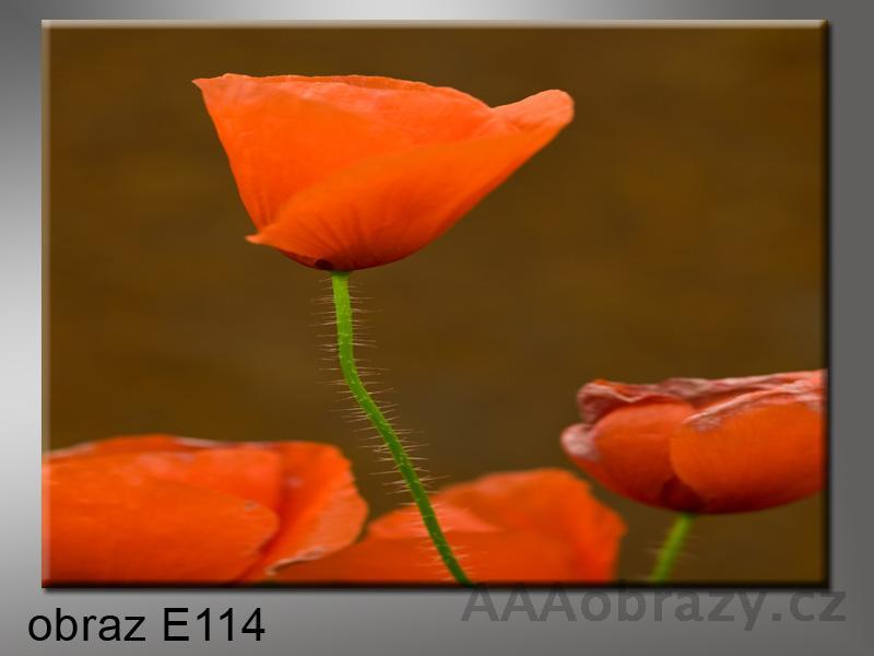Moderní obraz 1D 100x70cm E-114