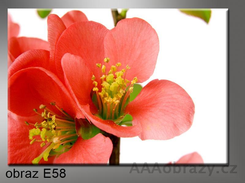 Moderní obraz 1D 100x70cm E-58