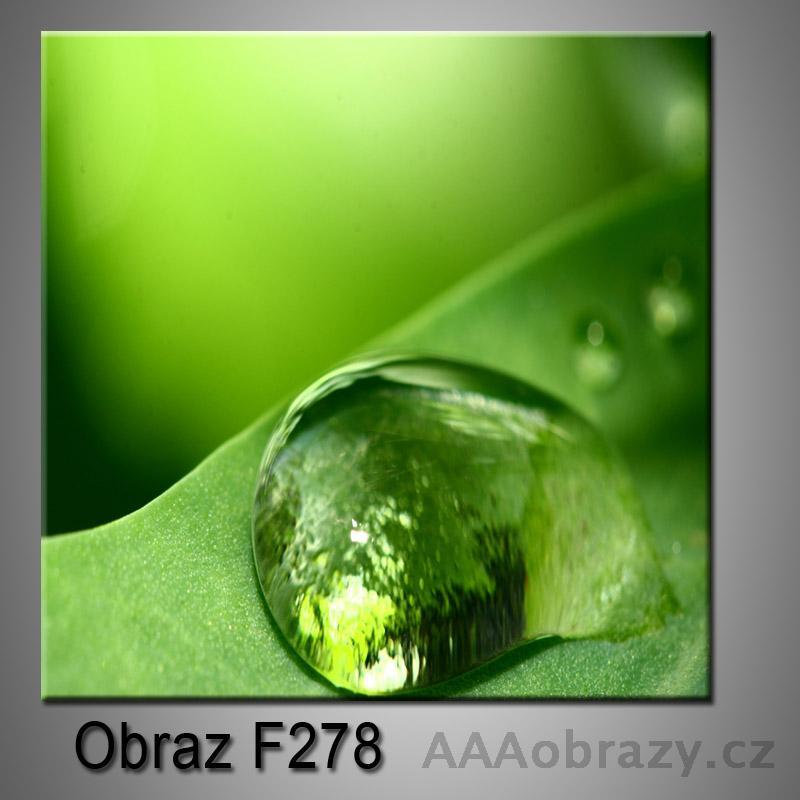 Obraz F-278