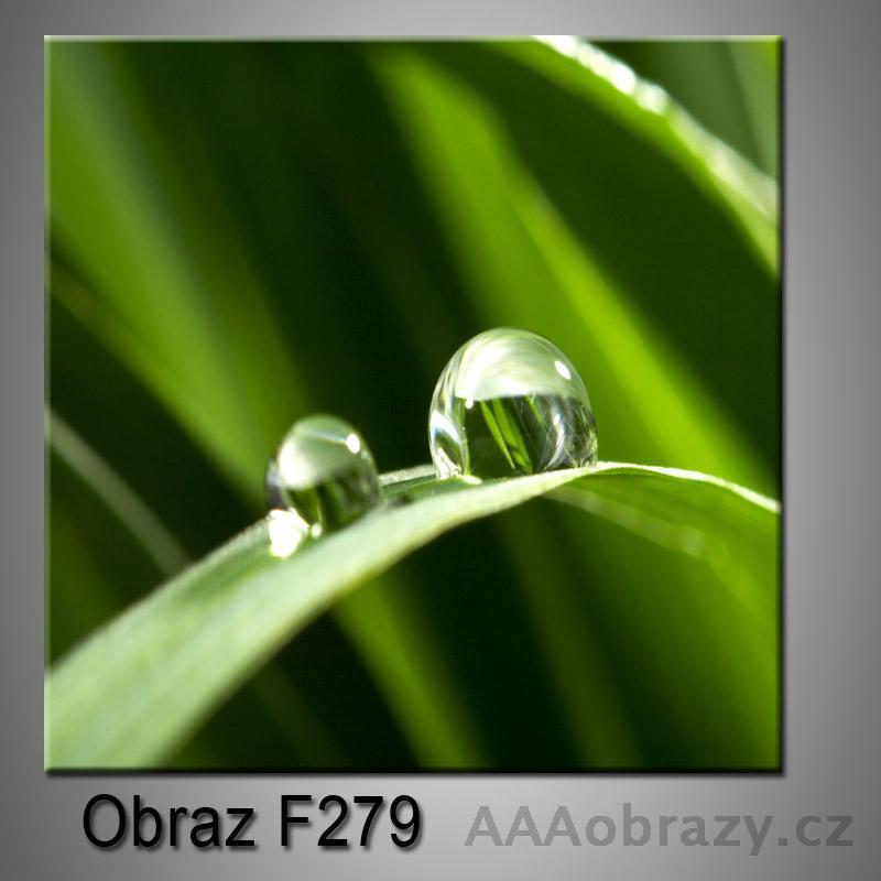 Obraz F-279