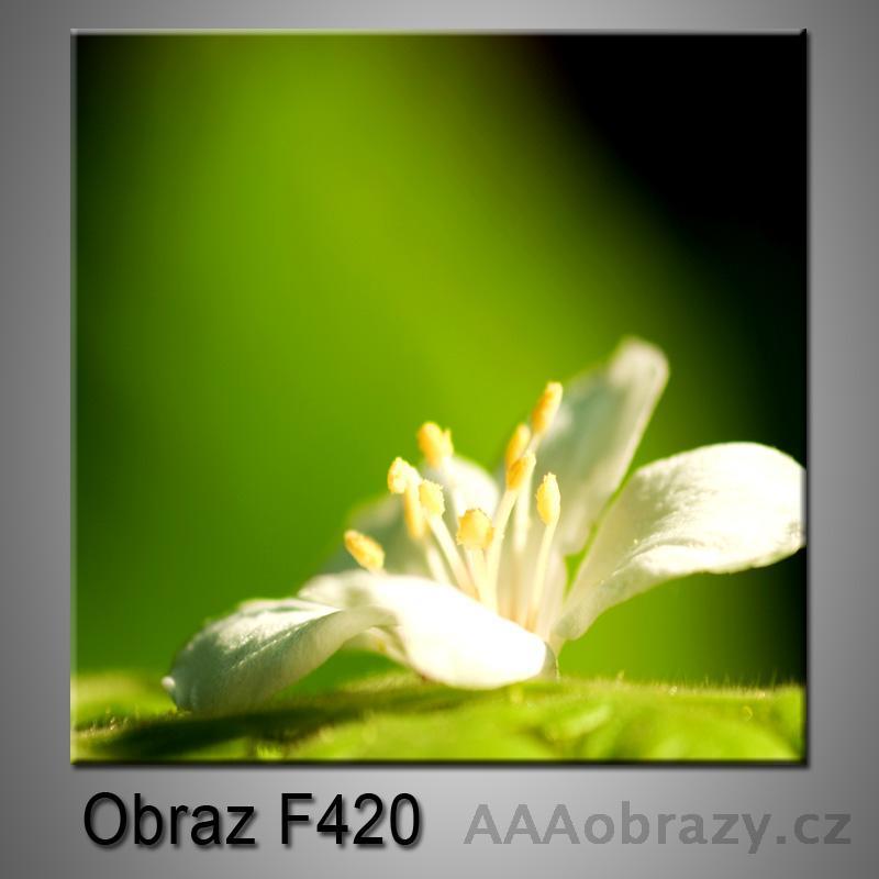 Obraz F-420