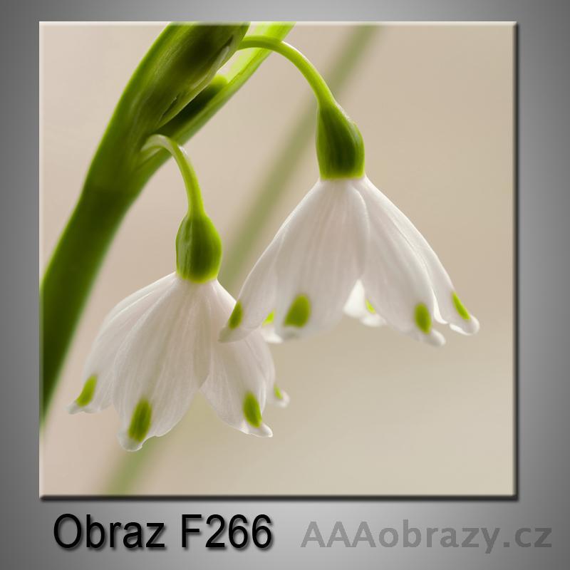 Obraz F-266