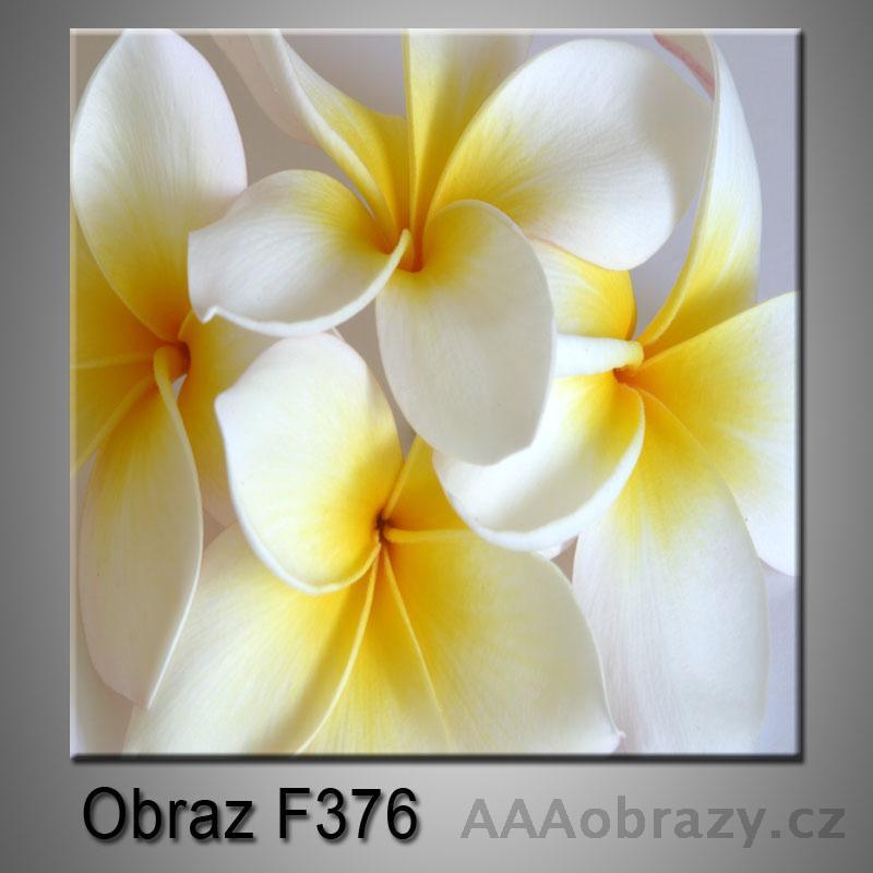 Obraz F-376