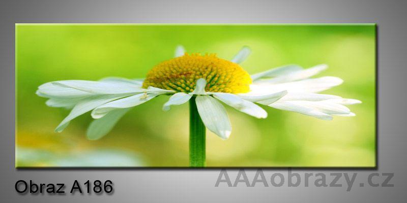 Moderní obraz 1D na plátně 100x40cm A186