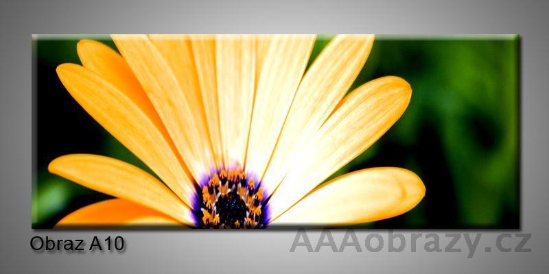 Moderní obraz 1D na plátně 150x70cm Panorama A10