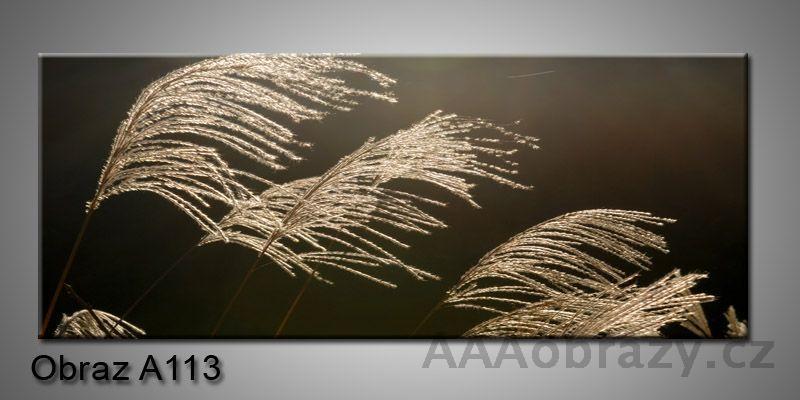 Moderní obraz 1D na plátně 150x70cm Panorama A113