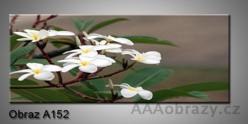 Moderní obraz 1D na plátně 150x70cm Panorama A152
