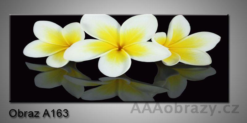 Moderní obraz 1D na plátně 150x70cm Panorama A163