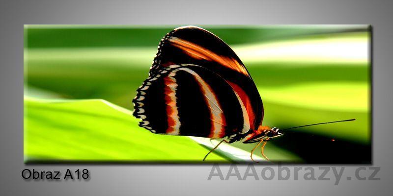 Moderní obraz 1D na plátně 150x70cm Panorama A18