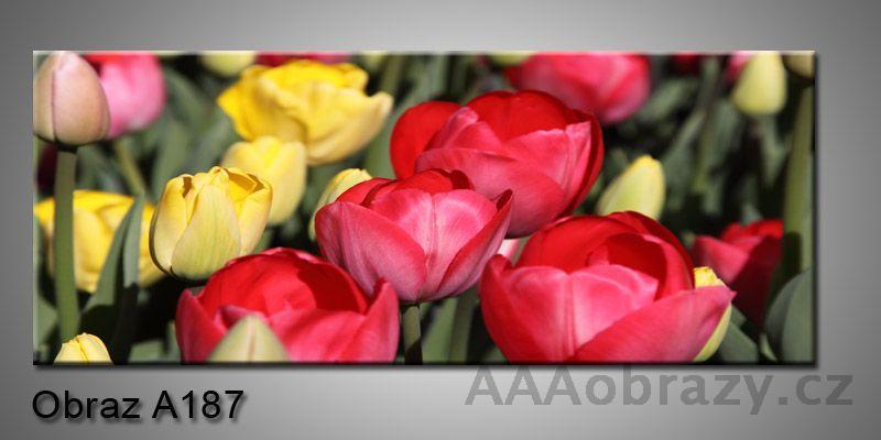 Moderní obraz 1D na plátně 150x70cm Panorama A187