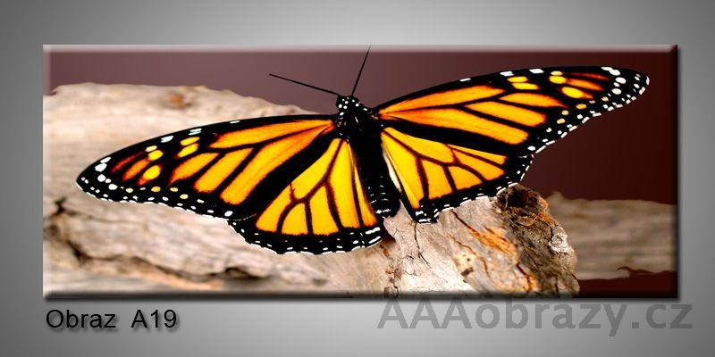 Moderní obraz 1D na plátně 150x70cm Panorama A19