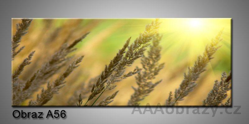 Moderní obraz 1D na plátně 150x70cm Panorama A56
