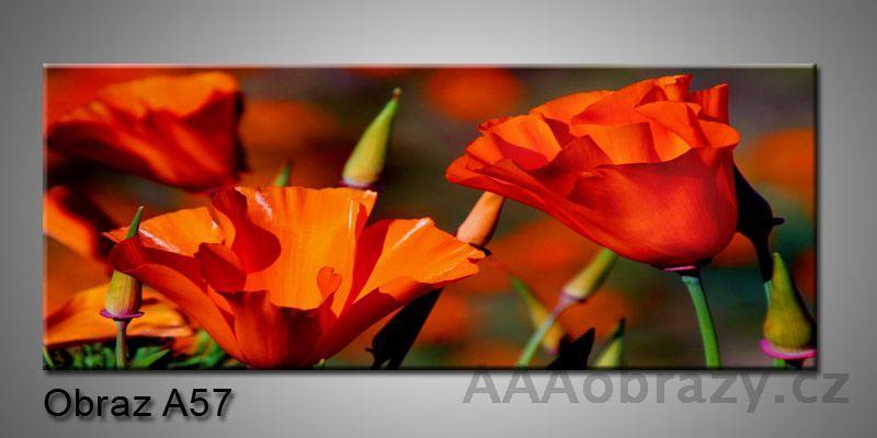Moderní obraz 1D na plátně 150x70cm Panorama A57