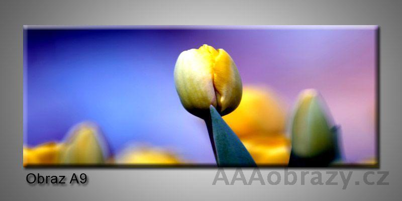 Moderní obraz 1D na plátně 150x70cm Panorama A9