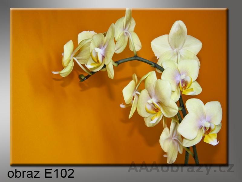 Moderní obraz do bytu 1D 70x50cm E-102