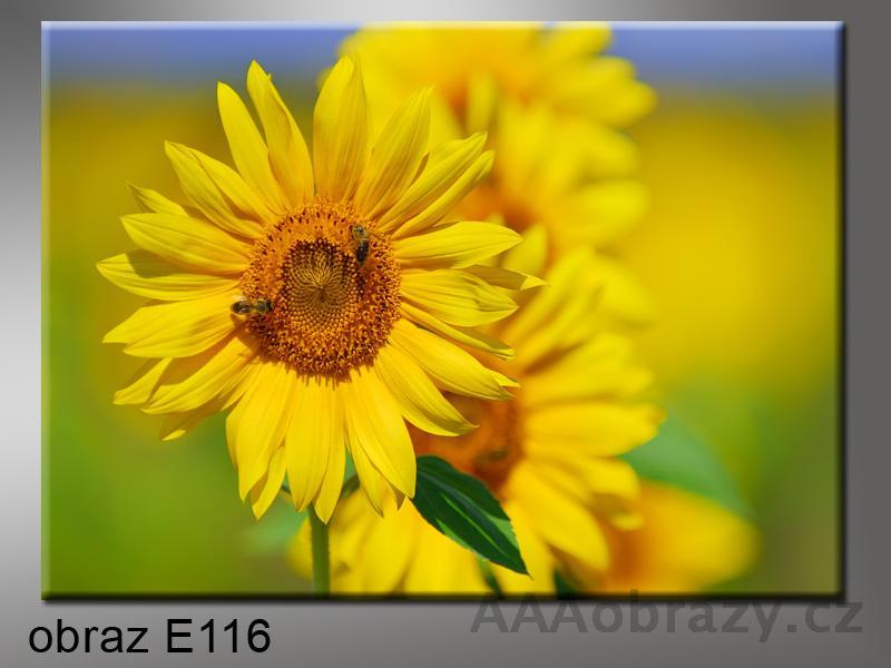 Moderní obraz do bytu 1D 70x50cm E-116