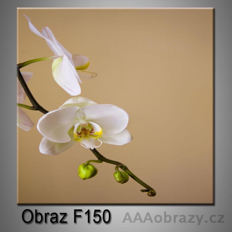 Moderní obraz do bytu 1D 25x25cm F-150