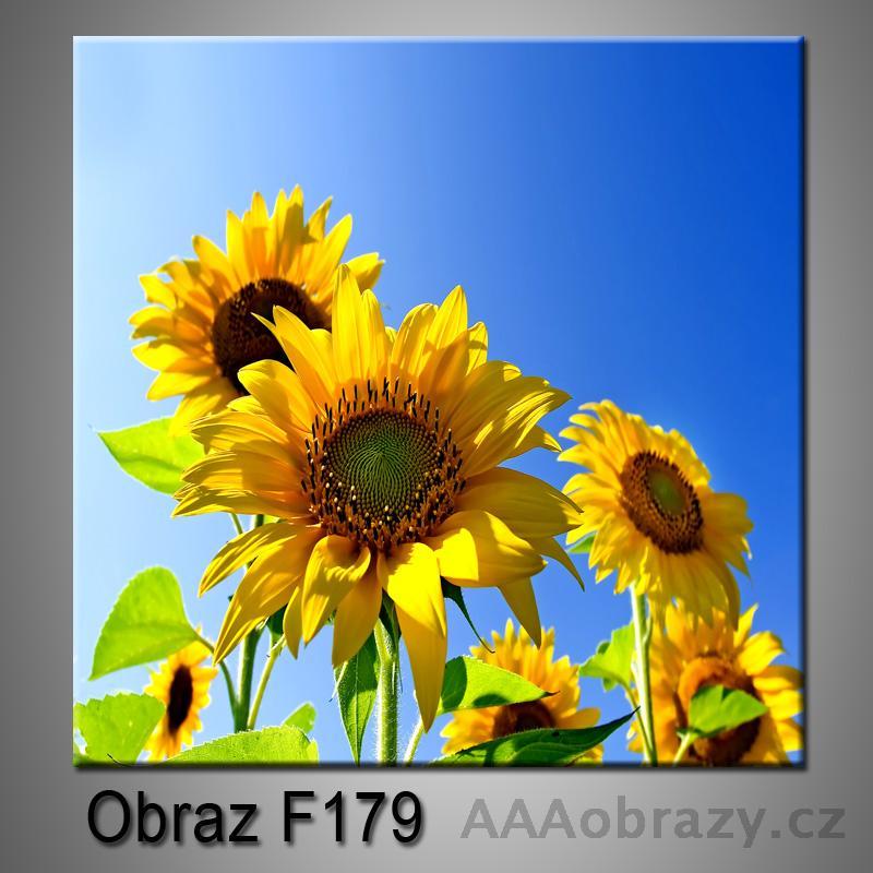 Moderní obraz do bytu 1D 25x25cm F-179