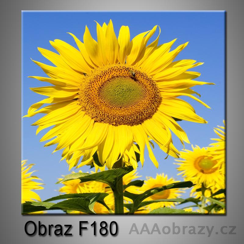 Moderní obraz do bytu 1D 25x25cm F-180