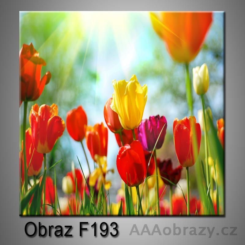 Moderní obraz do bytu 1D 25x25cm F-193