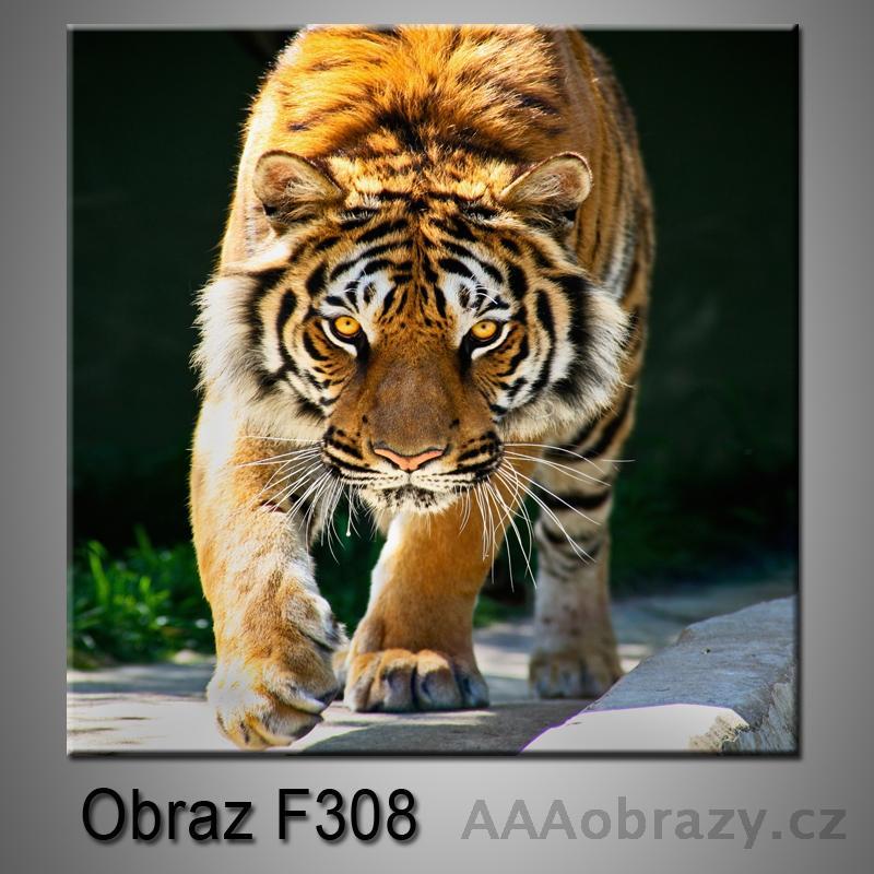 Moderní obraz do bytu 1D 25x25cm F-308