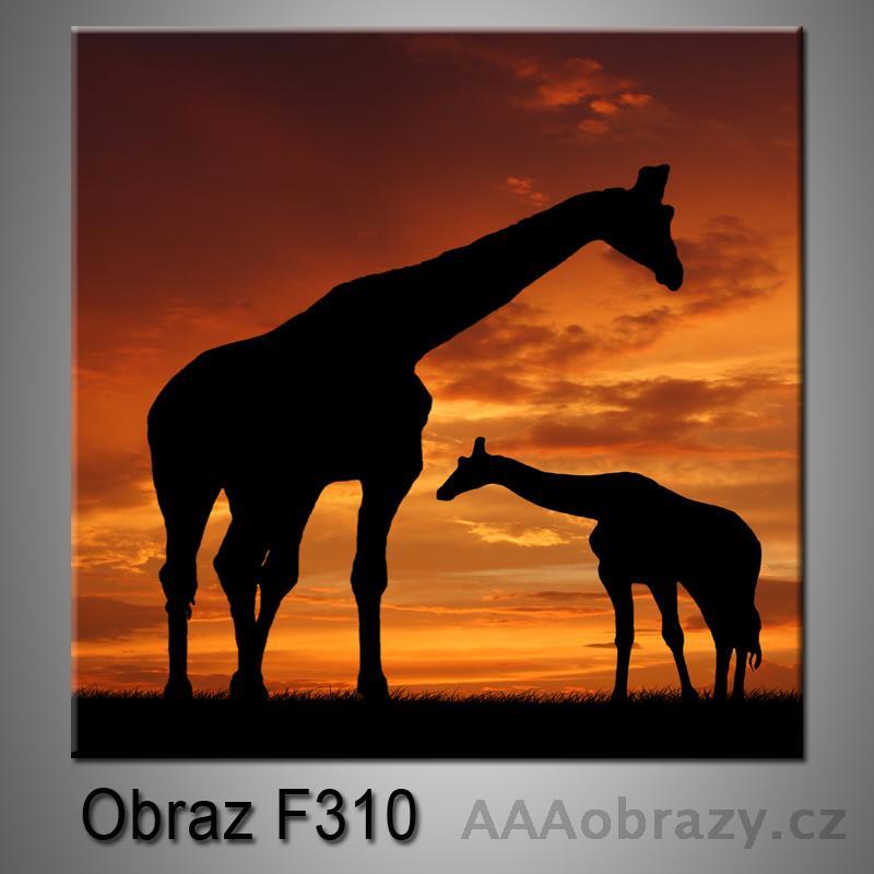 Moderní obraz do bytu 1D 25x25cm F-310