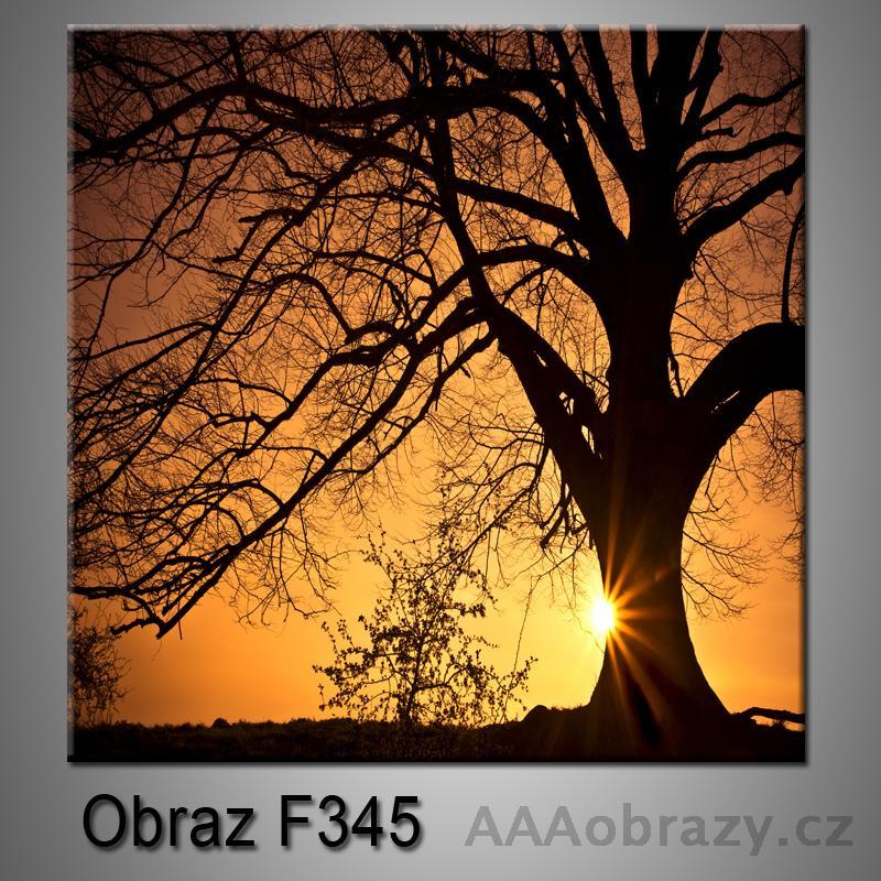Moderní obraz do bytu 1D 25x25cm F-345