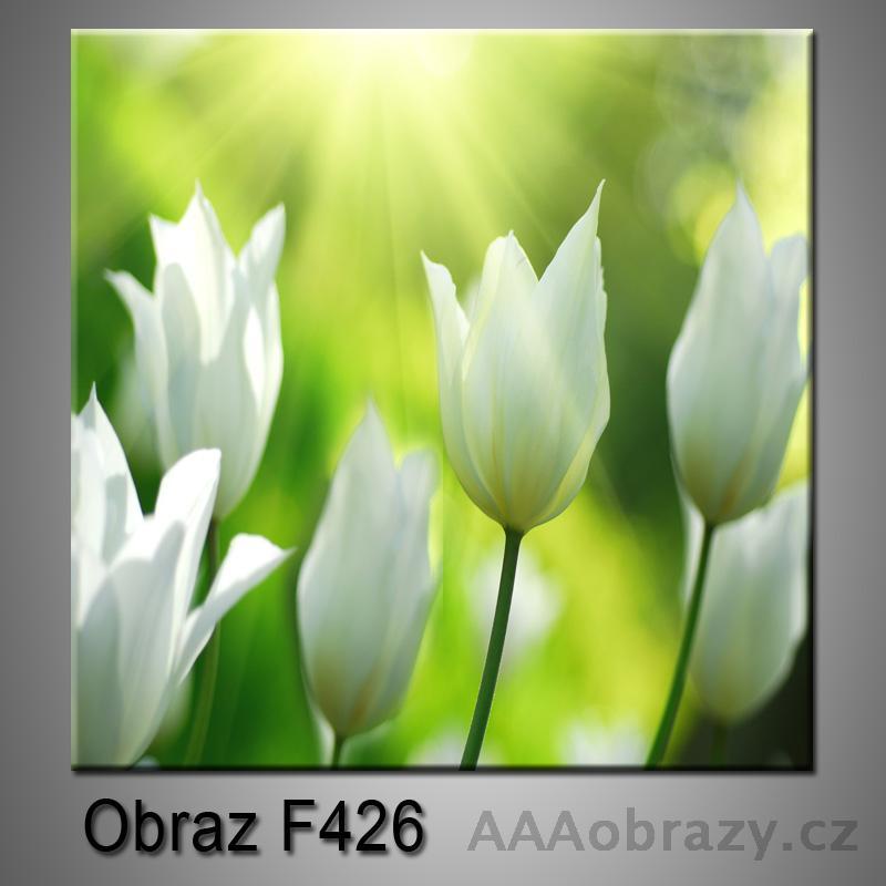 Moderní obraz do bytu 1D 25x25cm F-426
