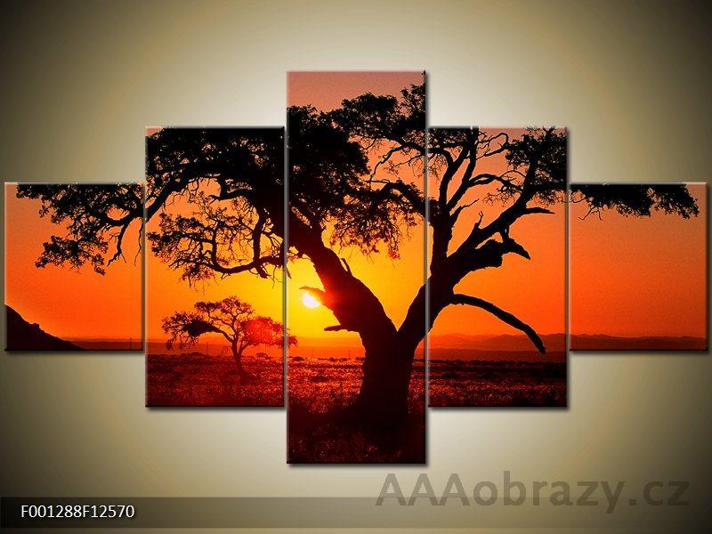 Obraz 5D - 125x70cm - strom a západ slunce