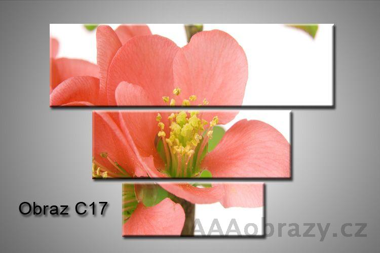Obraz na plátně 3D100x75cm C17