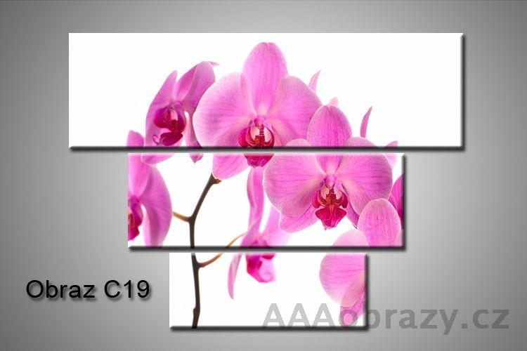 Obraz na plátně 3D100x75cm C19
