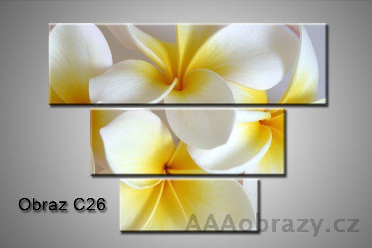 Obraz na plátně 3D100x75cm C26