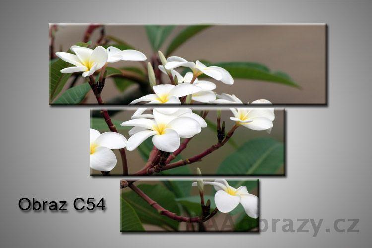 Obraz na plátně 3D100x75cm C54