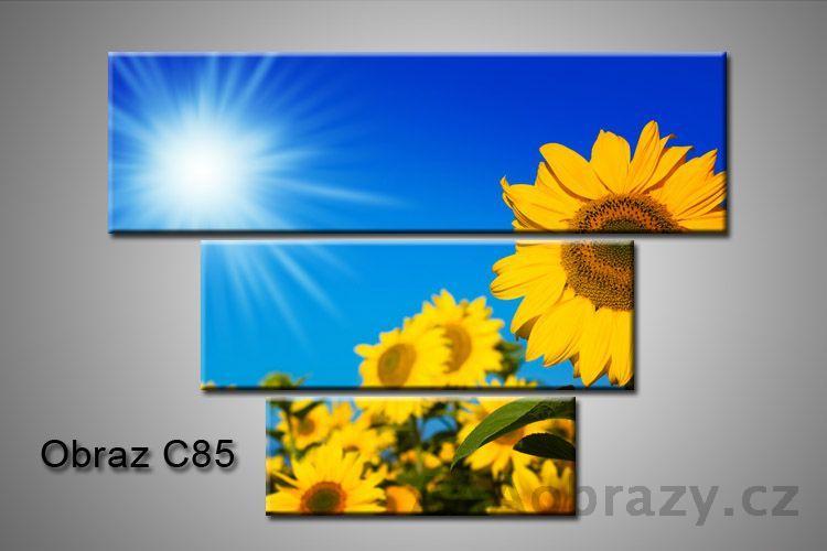 Obraz na plátně 3D100x75cm C85