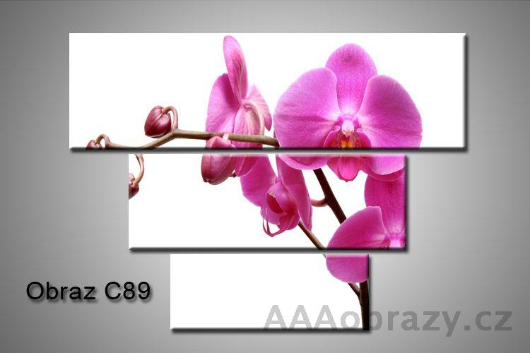 Obraz na plátně 3D100x75cm C89