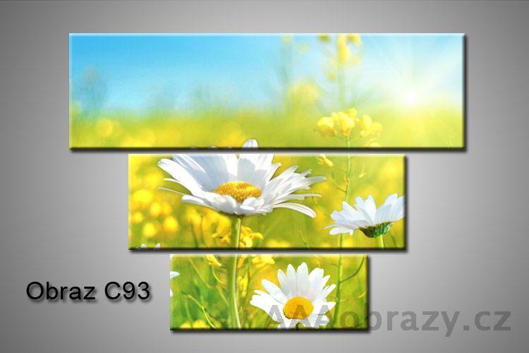 Obraz na plátně 3D100x75cm C93