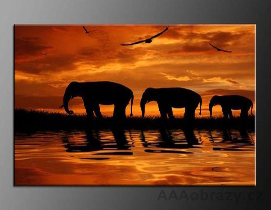 LED obraz 80x60cm vzor 310, západ slunce, afrika, slon