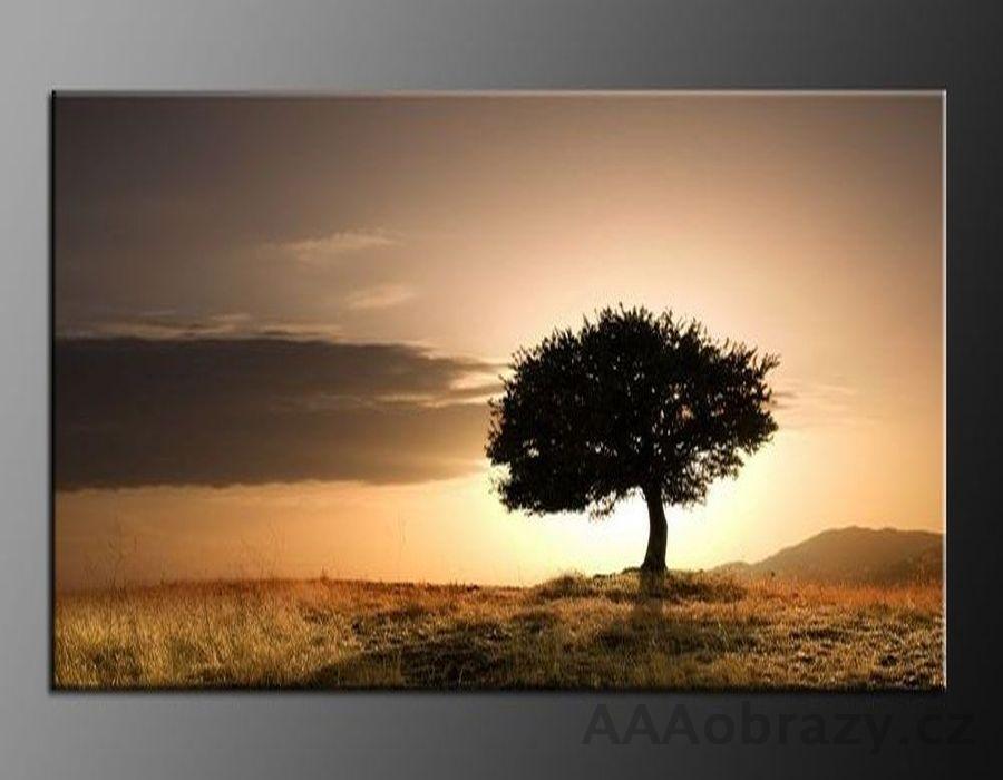 LED obraz 100x70cm vzor 702 strom, západ slunce, příroda, hory